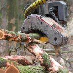 Wycinka drzew – nowe prawo z problemami