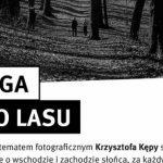 """Mieszkaniec Katowic zachwyca zdjęciami przyrody. Zobacz """"Drogę do lasu"""""""